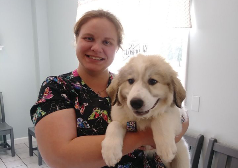 Dog Veterinary Care, Brockport